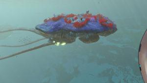 悠然と漂う巨大海洋生物